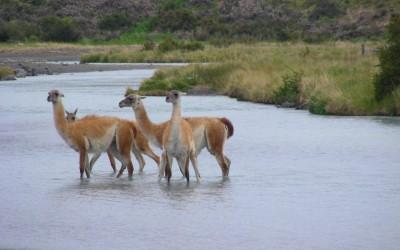 Fernreise durch Südamerika mit Impala Milou