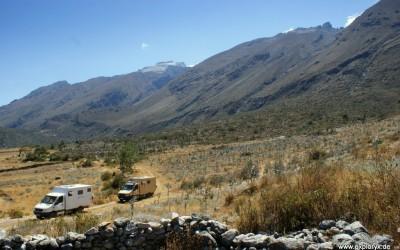 Impala in Südamerika unterwegs
