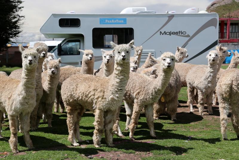Tierische Treffen mit Wohnmobil in Südamerika