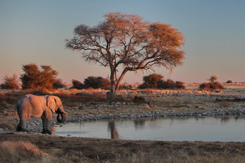 Der Etosha-Nationalpark in Namibia gilt als sehr artenreich