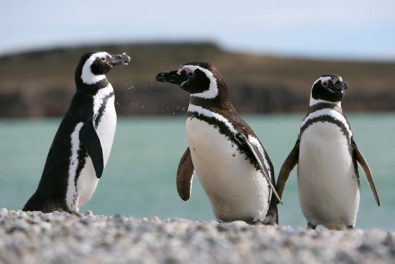 Die Tierwelt auf Expedition in Patagonien hautnah erleben
