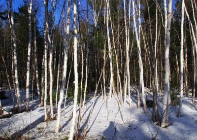 viele Wanderwege sind Ende April noch zugeschneit