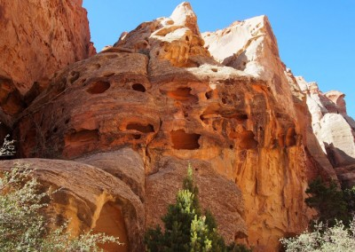 Capitol Reef National Park USA  (13)