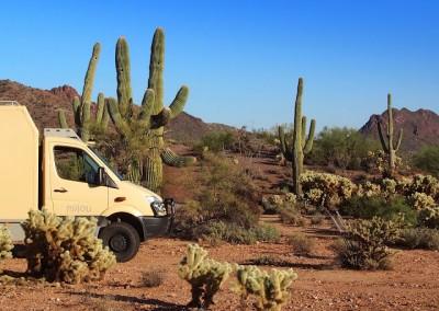 Sonora Desert (1)