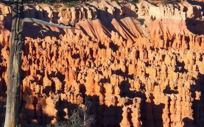 Sonora Desert (11)