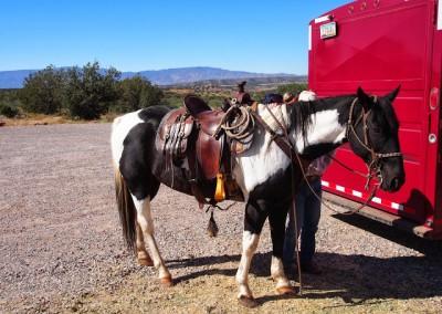 Sonora Desert (2)