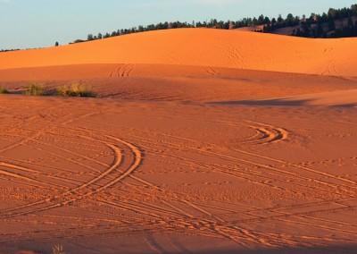 Sonora Desert (3)