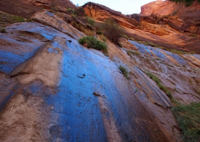 Sonora Desert (5)