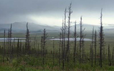 Expeditionsfahrzeug in Alaska - Exploryx (17)