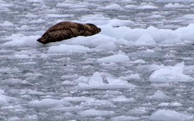 Expeditionsfahrzeug in Alaska - Exploryx (26)
