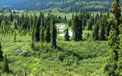 Expeditionsfahrzeug in Alaska - Exploryx (8)