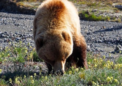 Mit dem Reisemobil nach Yukon Alaska (43)