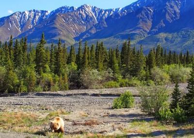 Mit dem Reisemobil nach Yukon Alaska (45)