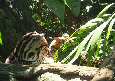 Reisebilder Costa Rica Wohnmobil (15)
