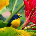 Reisebilder Costa Rica Wohnmobil (33)