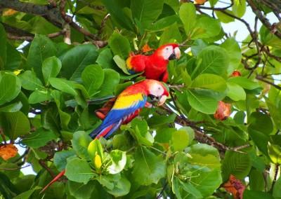 Reisebilder Costa Rica Wohnmobil (36)
