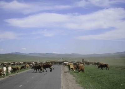 Mongolei (4)