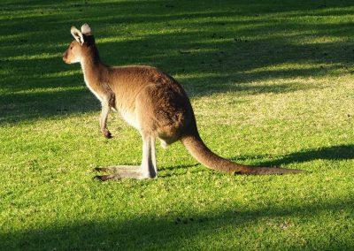 Expeditionsfahrzeug in Australien (15)