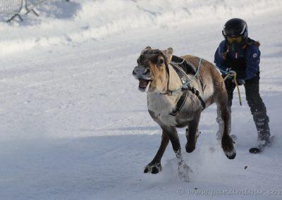 78_Norwegen_Exploryx Rentierrennen