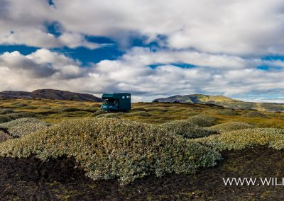 Weiden im schwarzen Lavasand